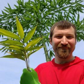 AllTerran Bamboo – vzgajamo orjaški bambus