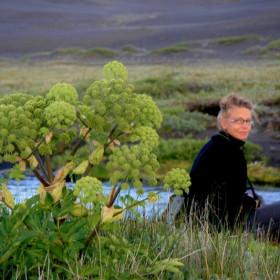 Vistvæn skjólbeltagerð